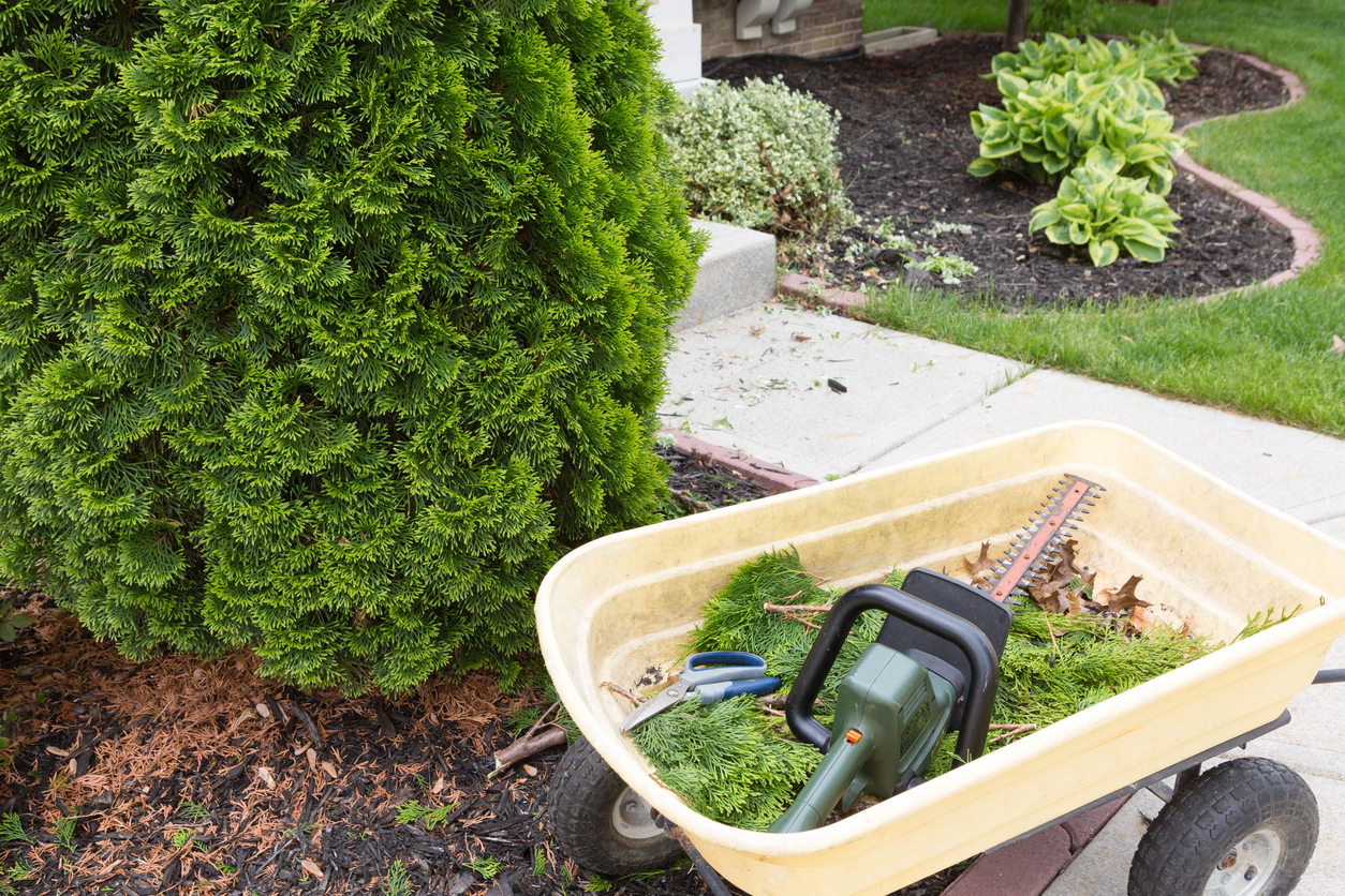 Want Your Landscaping Debris Gone Fast? A Same-Day Waste Bin May be Just the Thing